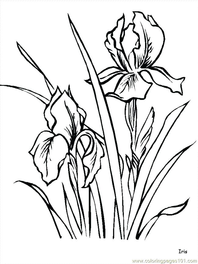 650x866 Coloring Pages Flowers Roses Best Flower Ideas On Drawing Drawings