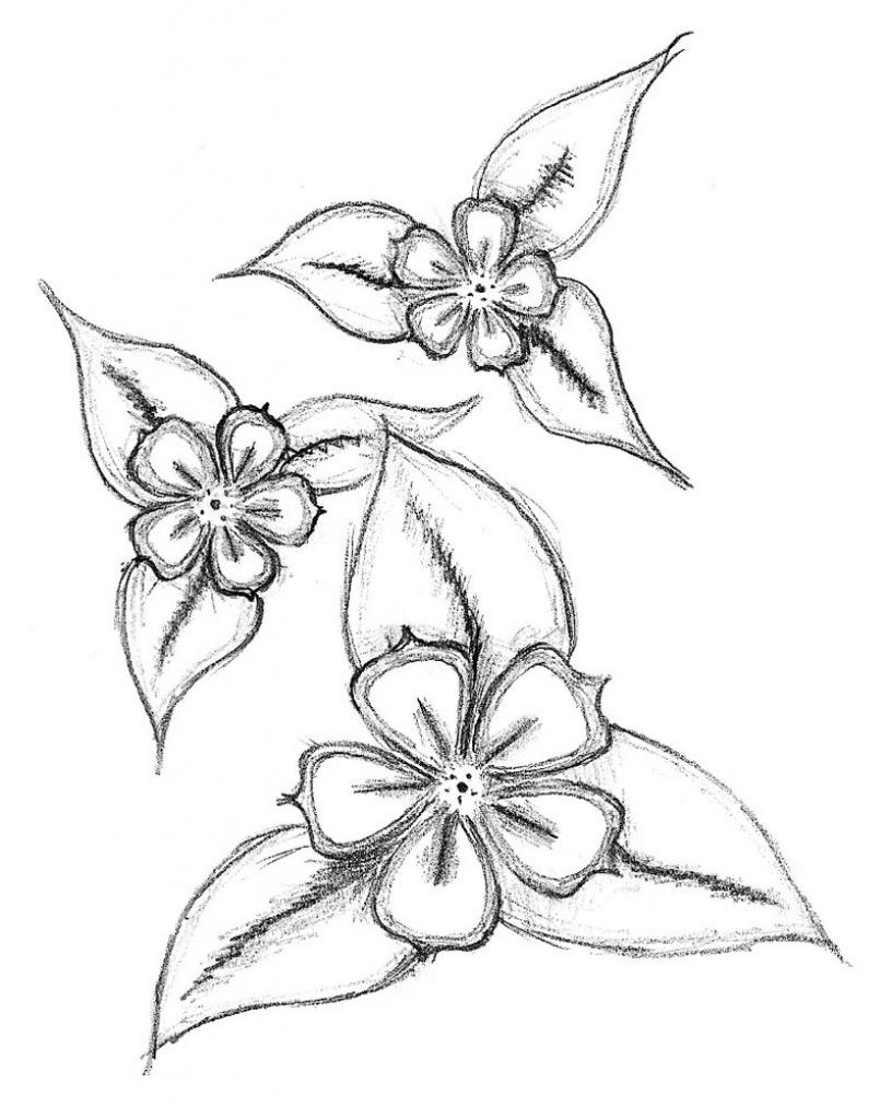 815x1024 Easy Pencil Drawings Of Flowers Easy Flower Drawings In Pencil
