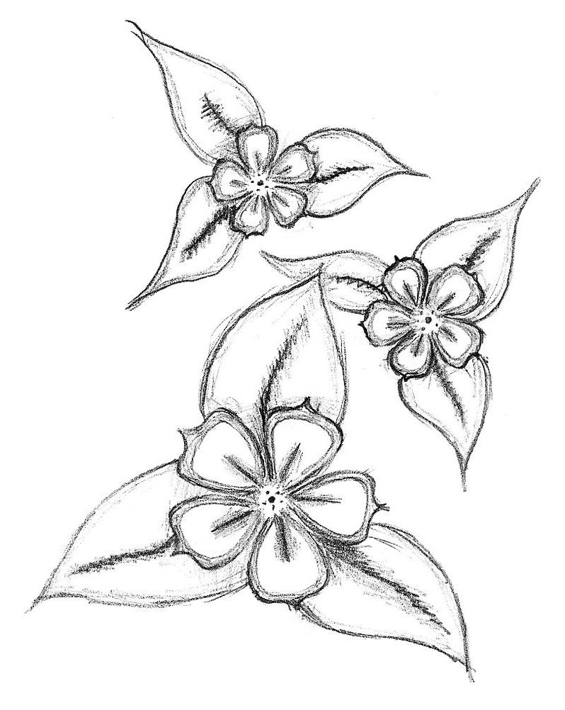798x1002 Flowers Drawings In Pencil Easy Easy Flower Drawing