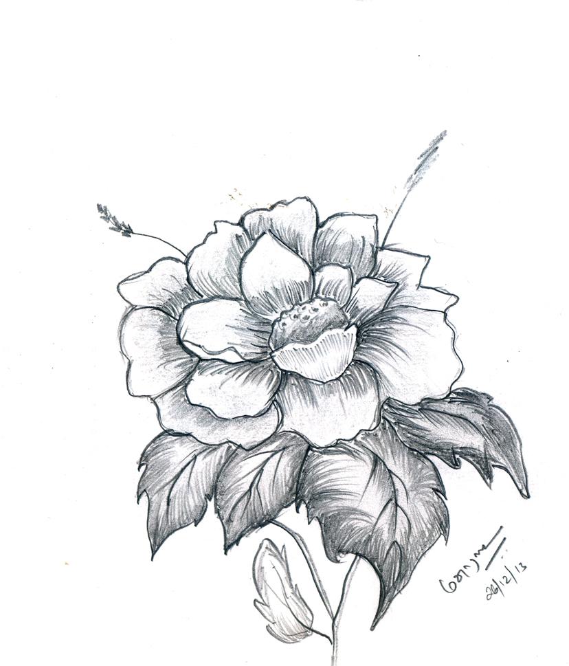 828x969 Pictures Flower Pencil Sketch Wallpaper,