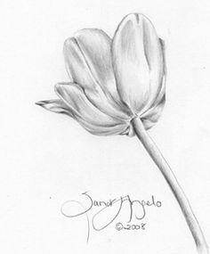 236x285 Drawn Tulip Shading