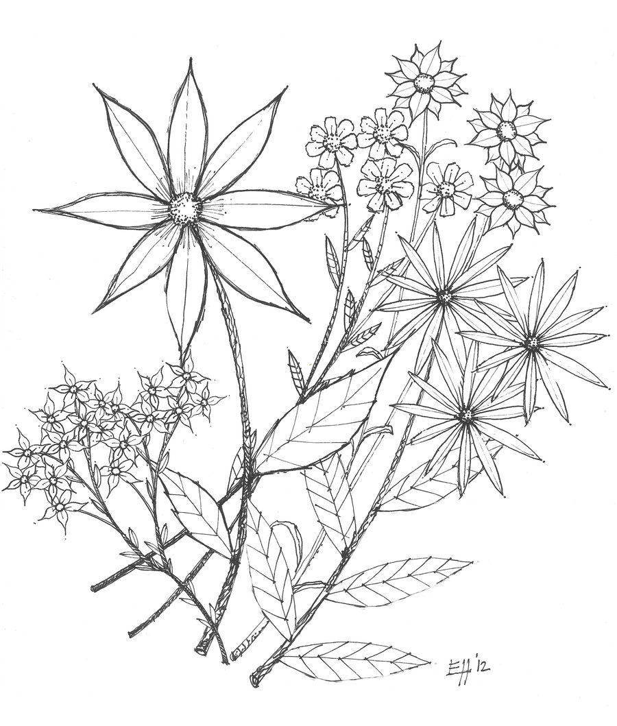 Flowers Drawing Tumblr At Getdrawings Free For Personal Use