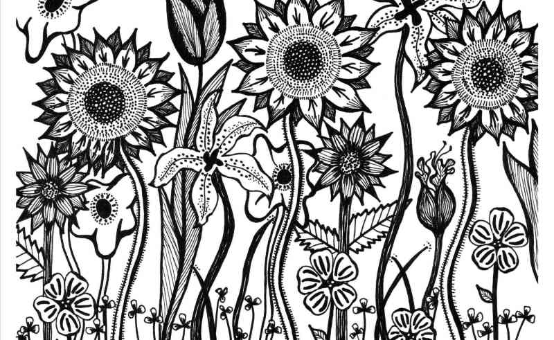 800x491 Tumblr Sketches Flowers And Roses Gardening Flower And Vegetables