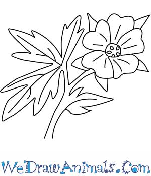 300x350 How To Draw A Geranium Flower