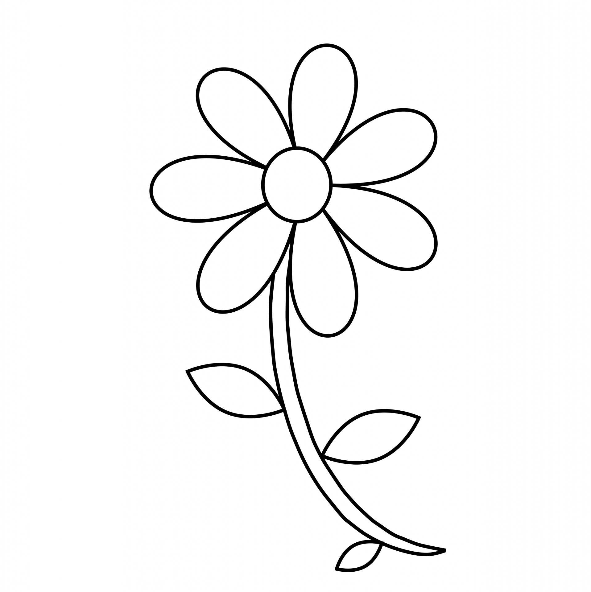 1916x1920 Outline Drawing Of A Flower Easy Flower Drawing Outline Flower