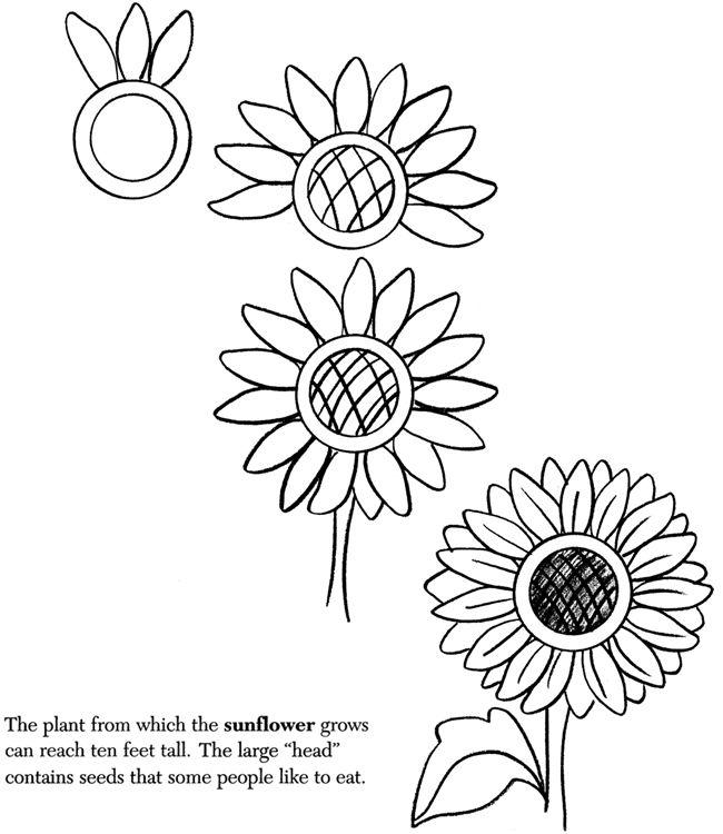 650x750 Ways To Draw Flowers
