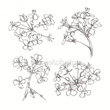 450x450 Cherry Blossom Flower Drawing Sketch Black White Line Art Stock