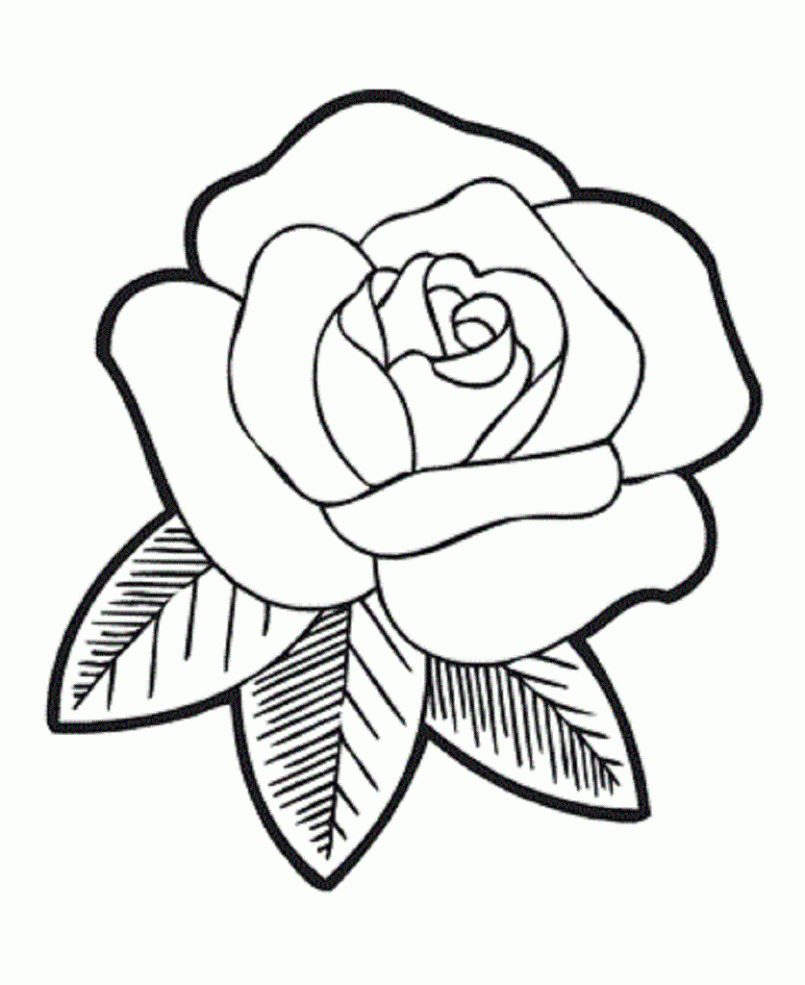 805x985 Drawing How To Draw Rosend Flowers With How To Draw