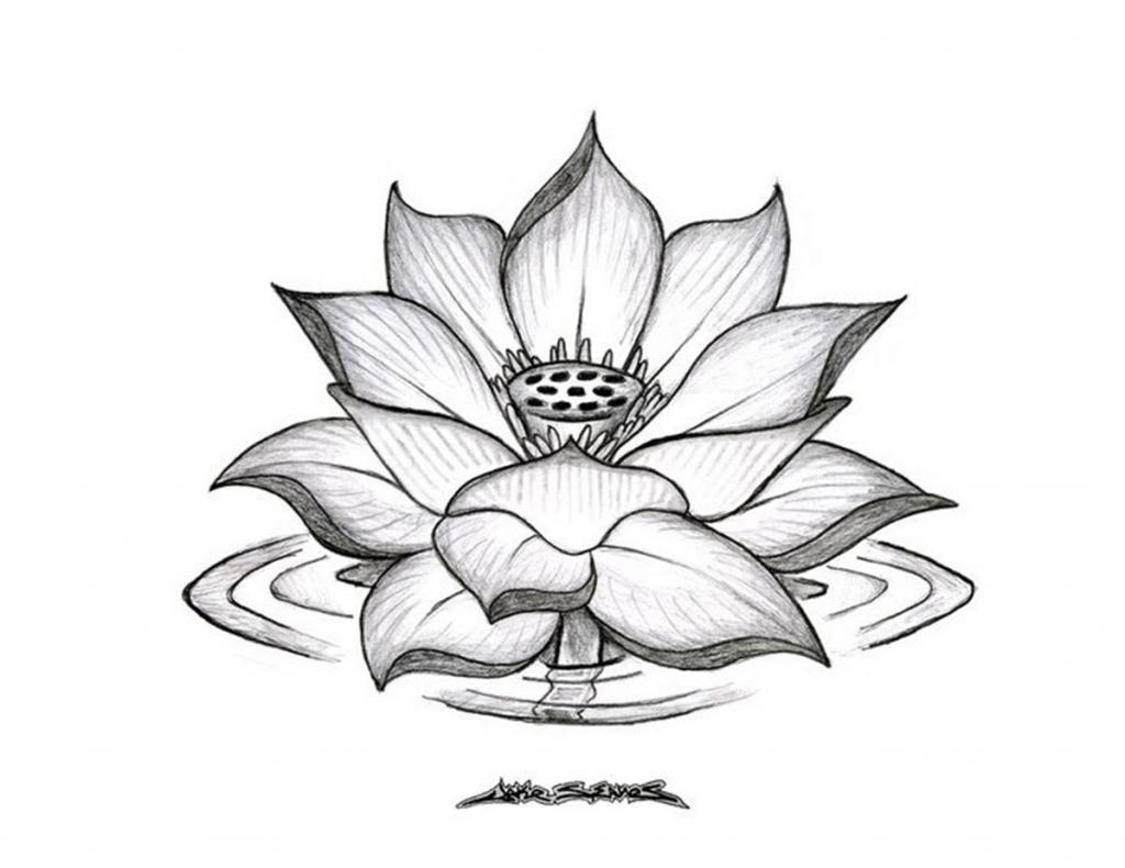 1024x790 Lotus Flower Drawing Sketch Lotus Flower Drawing