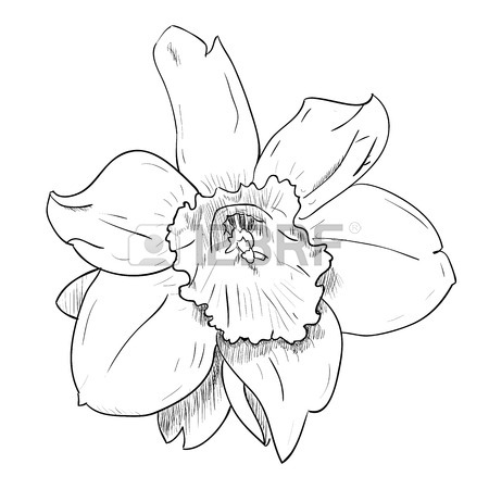 450x450 Vector Drawing Sketch Of Vase With Flowers. Hand Draw Illustration