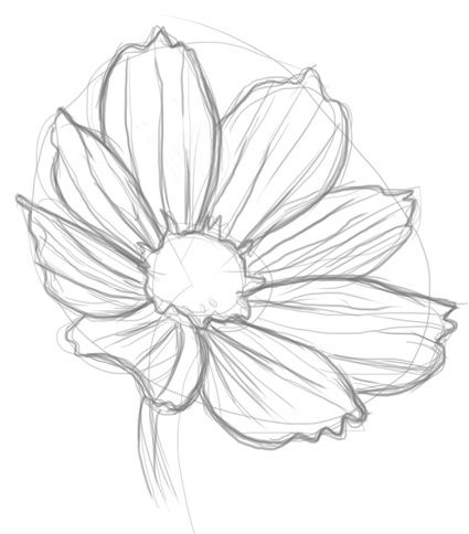 425x484 Realistic Flowers To Draw
