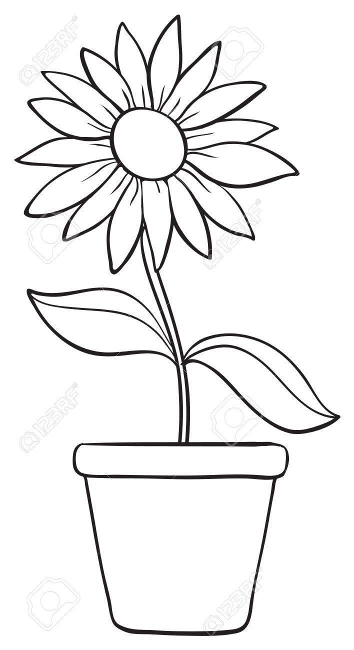 708x1300 Pictures Flower Pot Sketch Image,