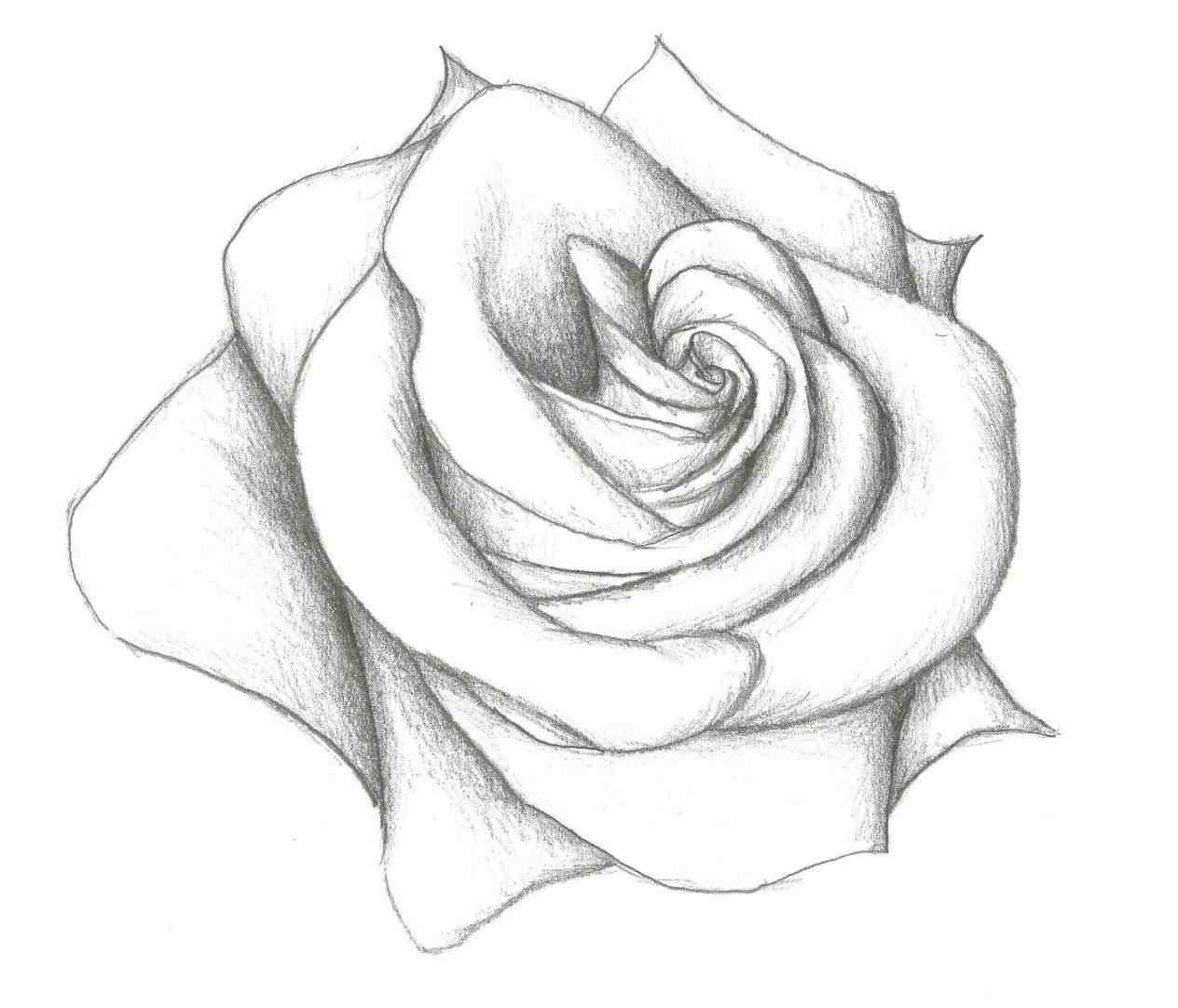 1264x1082 Flowercolor Sketch Pencil Drawings Flowers Of How To Draw