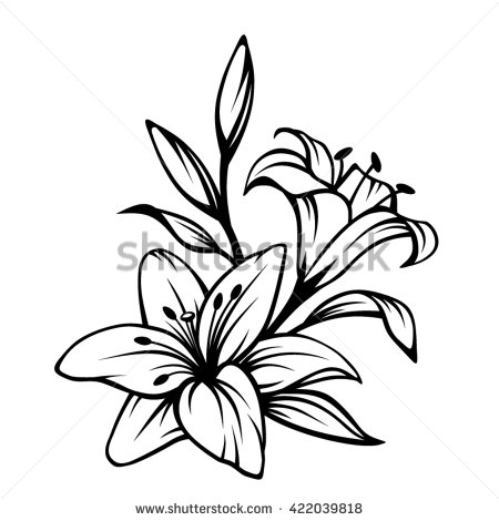 450x470 Lily Flower Drawing Inderecami Drawing