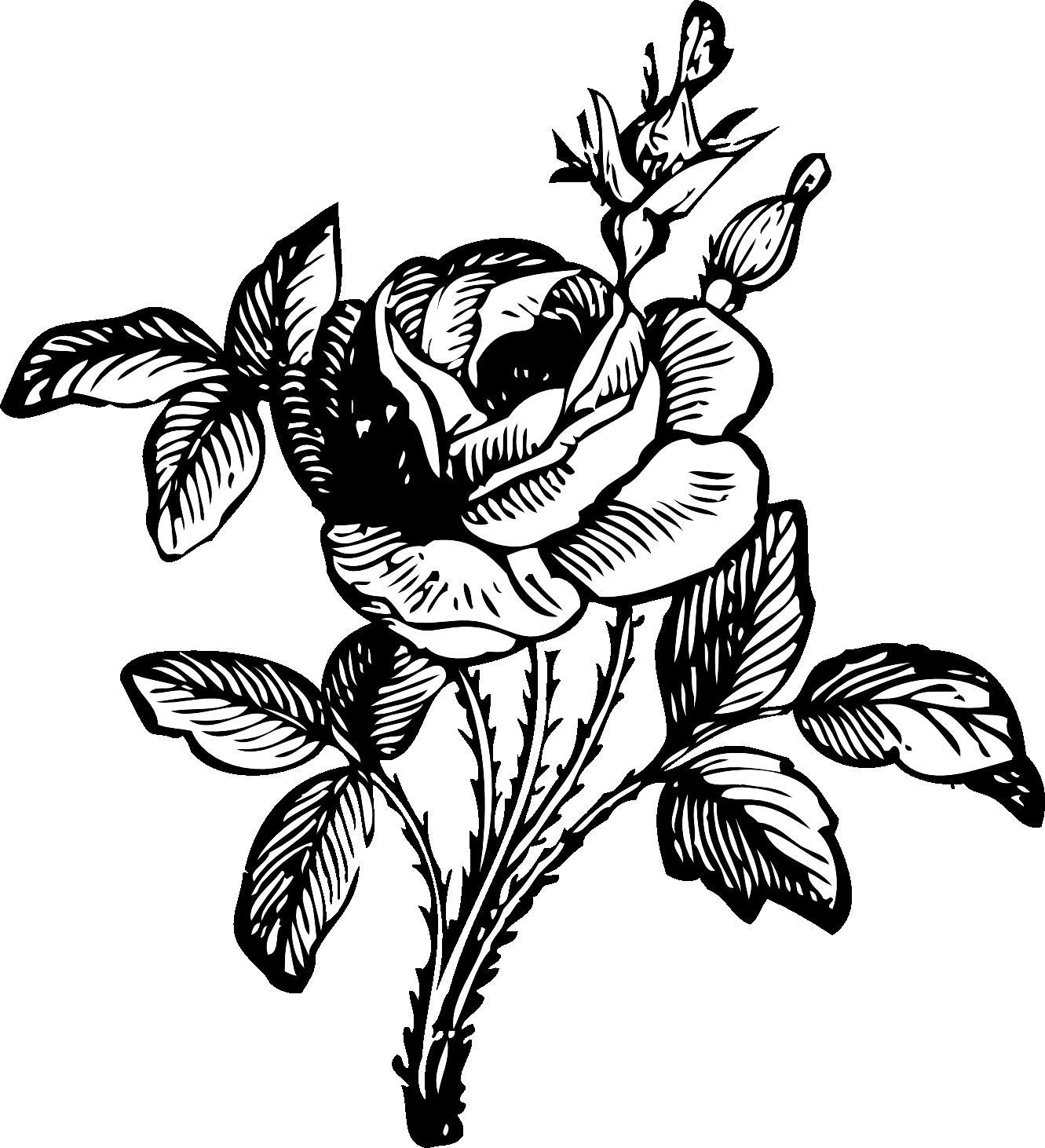 1331x1462 Hoontoidly Single Black Rose Drawings Images