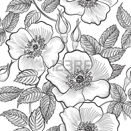 450x450 Black And White Flowers Stock Photos. Royalty Free Business Images