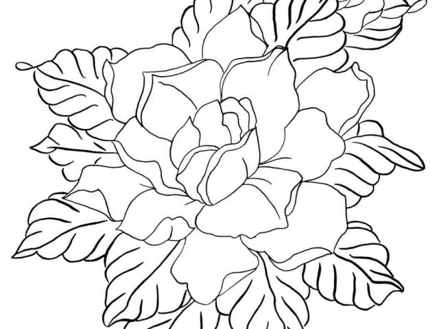 640x480 The Images Collection Of Download Flower Drawing How To Draw