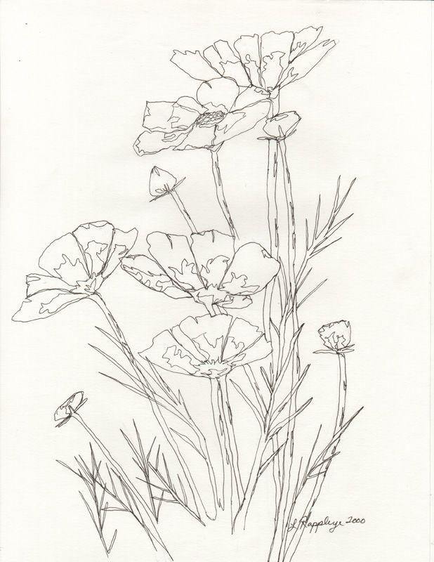 618x800 Flower Line Drawing Line Drawings Flower, Drawings