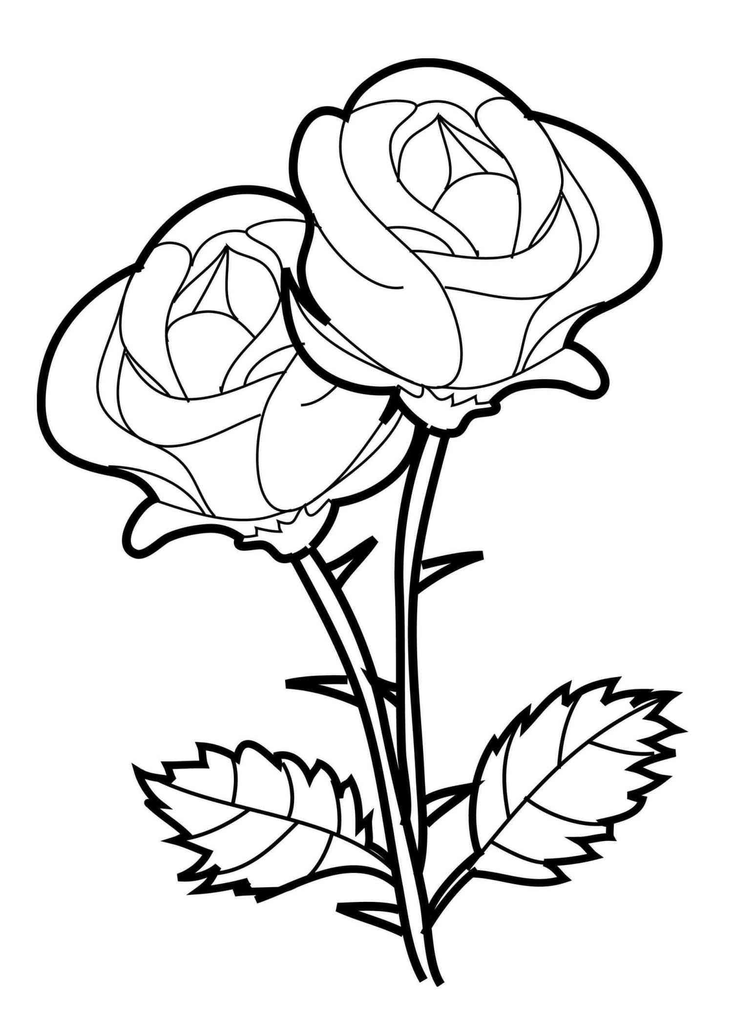 1503x2101 Flower Realistic Rose Line Drawing Page Printable Coloring Sheets
