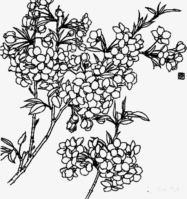 600x637 Flowers Line Drawing Branch, Flowers, Branches, Line Drawing Png