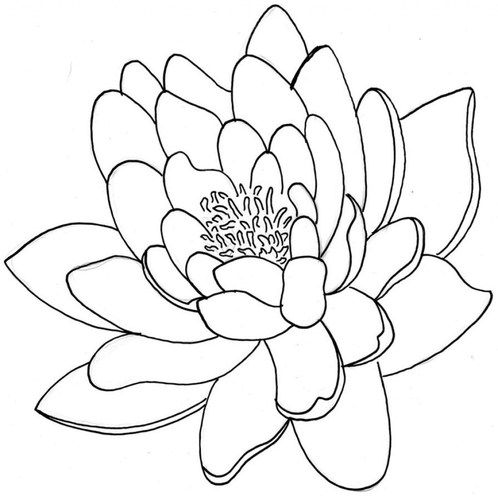 1024x1021 Lotus Flower Line Drawing 1000 Images About Graphic Lotus