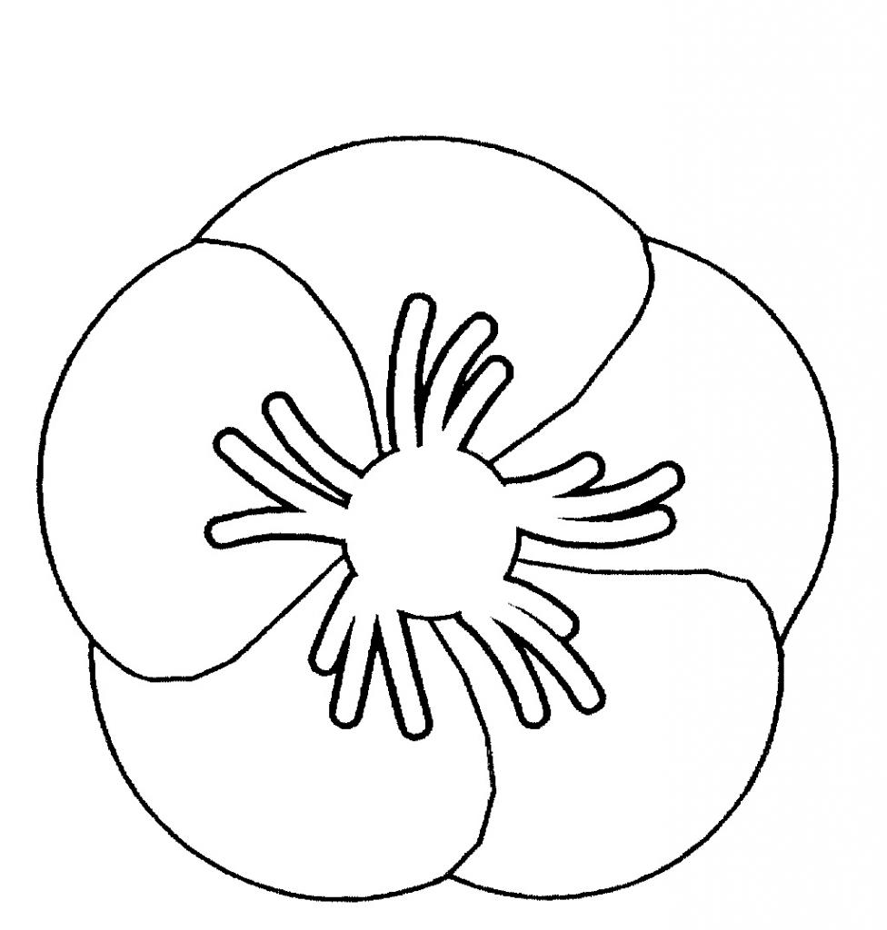 976x1024 Poppy Flower Line Drawing