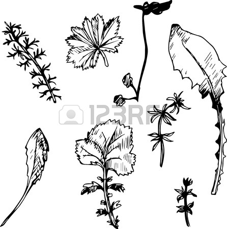 446x450 Set Of Ink Drawing Wild Flowers With Leaves, Line Drawing Wild