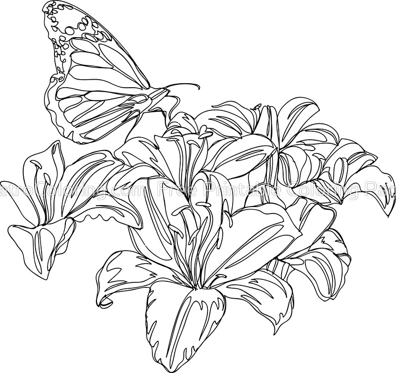 800x753 Butterflies And Flowers Continuous Line Drawing Art Prints By