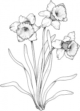 260x360 Flowers Coloring Pages Super Coloring