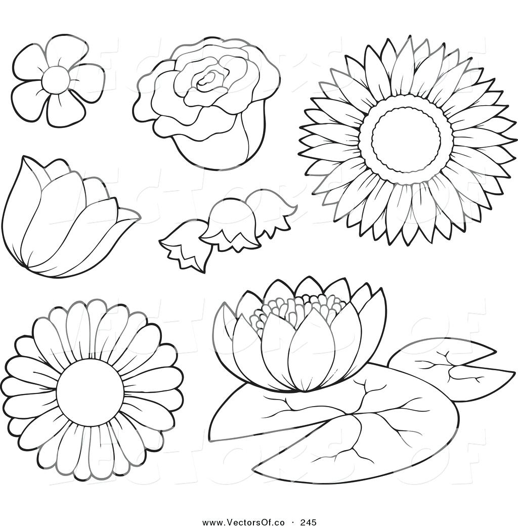 1024x1044 Out Lines Flowers Images Coloring Appealing Flower Outlines. Rose