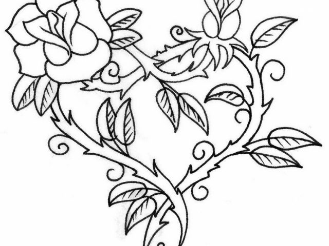 640x480 Outline Drawing Of Rose Flower