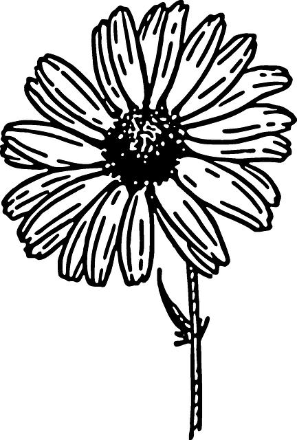 432x640 Black, Outline, Drawing, Sketch, Flower, White, Cartoon