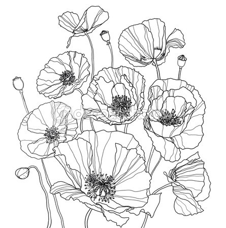 445x449 Coloring Page With Poppies Embroidery Amp Needlework