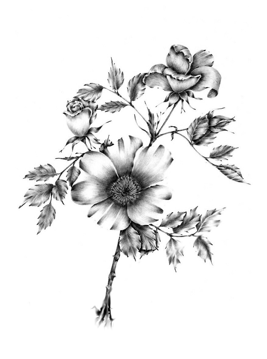 878x1179 Floral Drawings