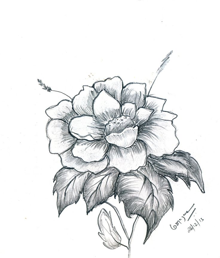 736x861 pencil drawings art pencil drawings of flowers