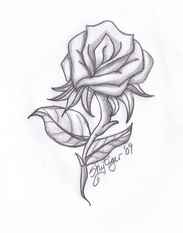 Flowers Pencil Drawing At Getdrawings