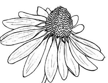 371x286 Drawn Floral Line Drawing