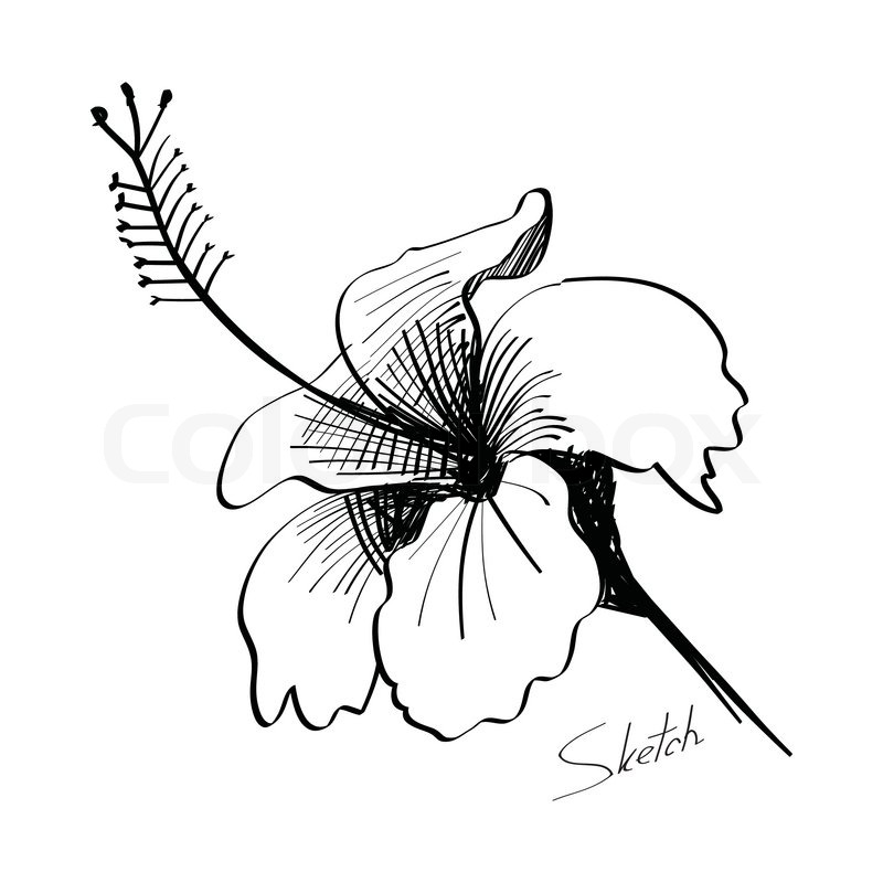 800x800 Sketch Of Flower Hand Drawn Stock Vector Colourbox