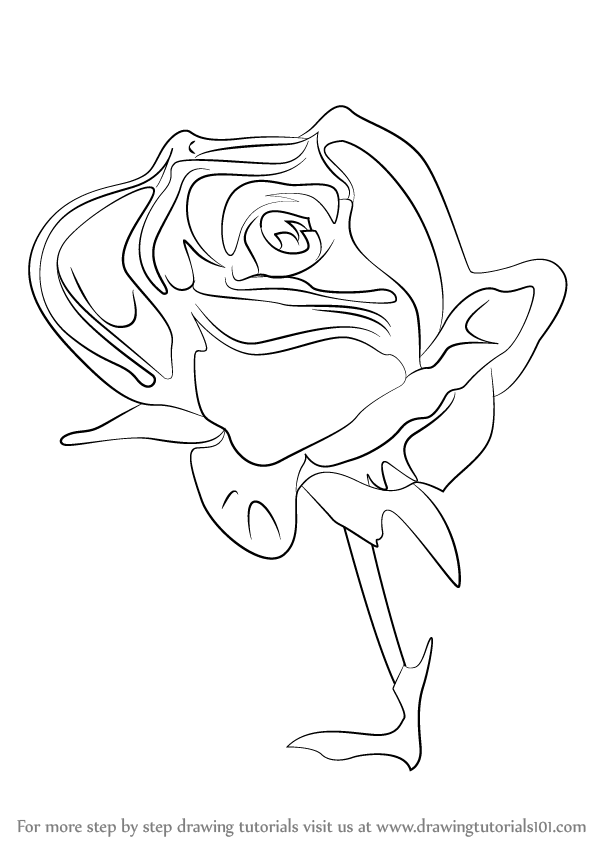 598x844 How Draw A Rose Flower Step By How