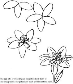 236x272 Photos How To Draw A Flower,