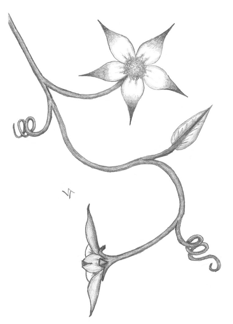 758x1054 Simple Pencil Sketches Of Flowers Step By Step Flower Pencil