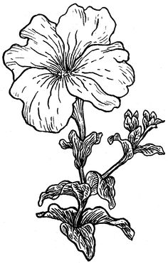 236x370 Petunia Clipart Tumblr Flower