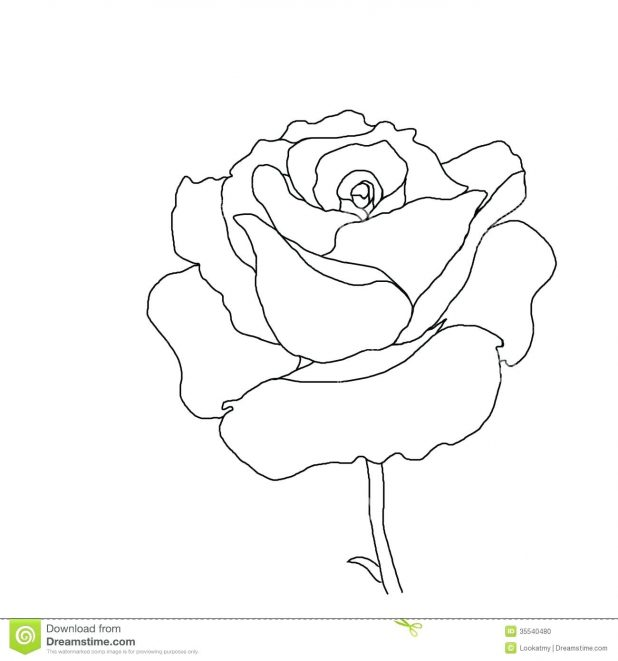 618x661 Coloring Pages Extraordinary Outline Of Flowers. Outline Flowers