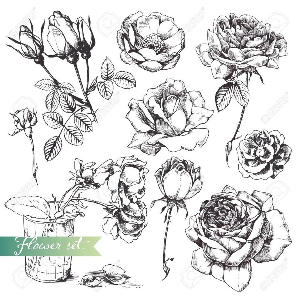 1024x1024 Flower Vase Drawing Rose Flower Set Highly Detailed Hand Drawn