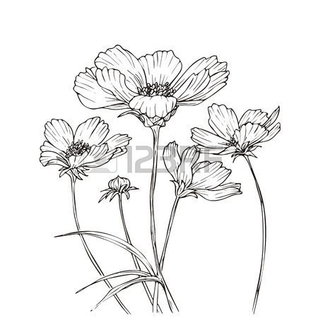 450x450 2,575 Cosmos Flower Cliparts, Stock Vector And Royalty Free Cosmos