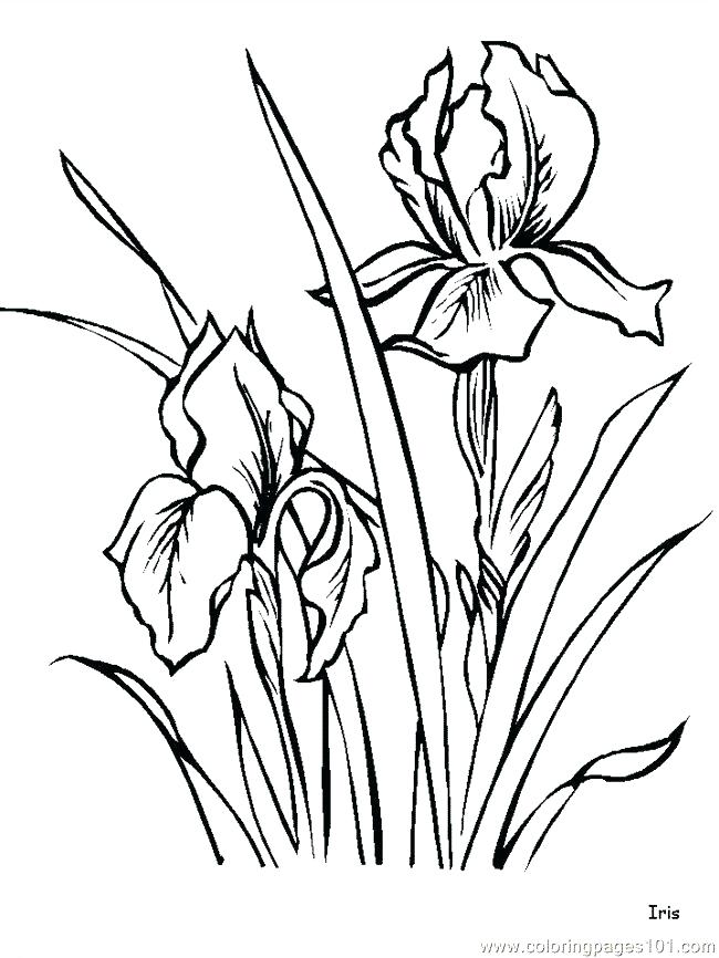 650x866 Hibiscus Flower Coloring Pages Luau Coloring Pages Coloring Pages