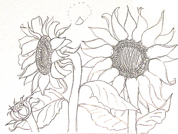 611x460 How To Draw Sunflowers