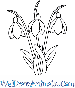 300x350 How To Draw A Snowdrop Flower