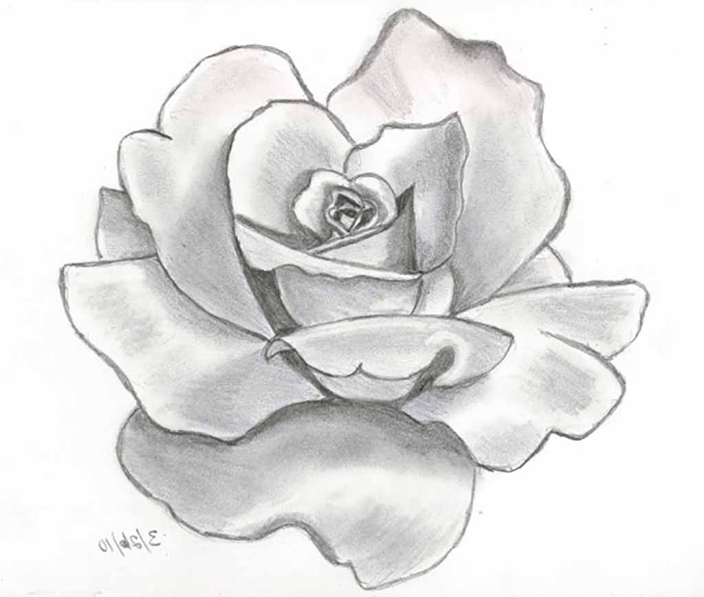 1024x869 3d Sketches Of Flowers Flower Drawings Drawings And Flower