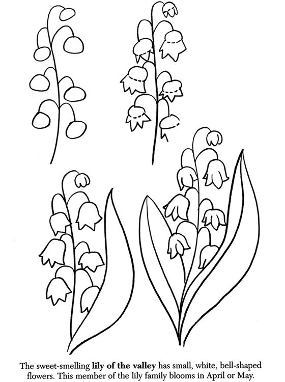 560x750 99 Best How To Draw Tutorials Flowers Images